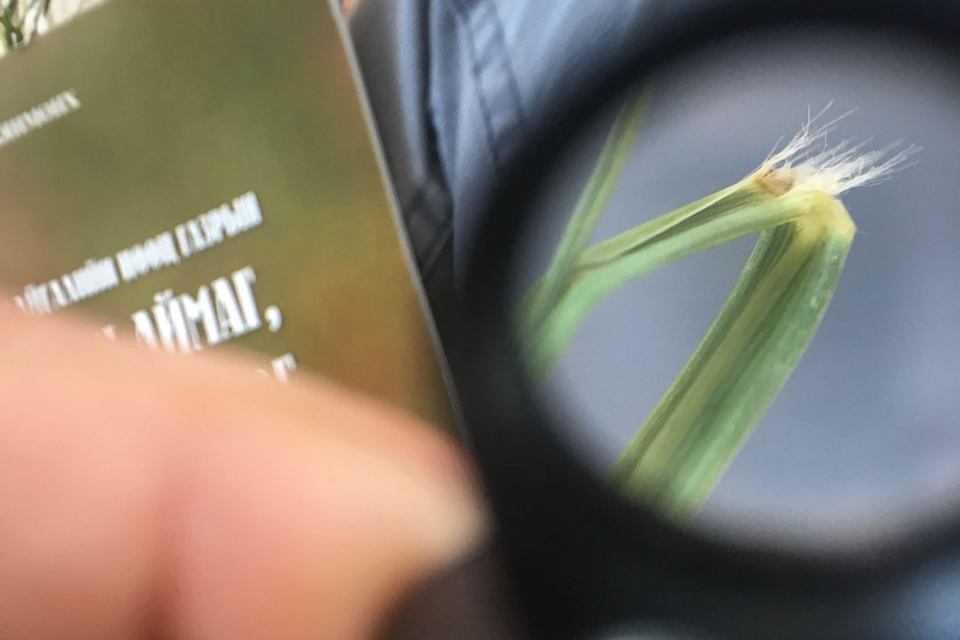 Fingers holding a piece of grass under a microscope.